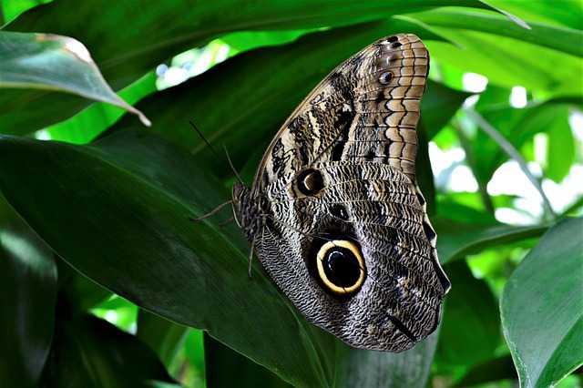 butterfly-2782239_640