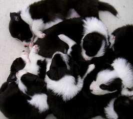 lying-puppies-1377990